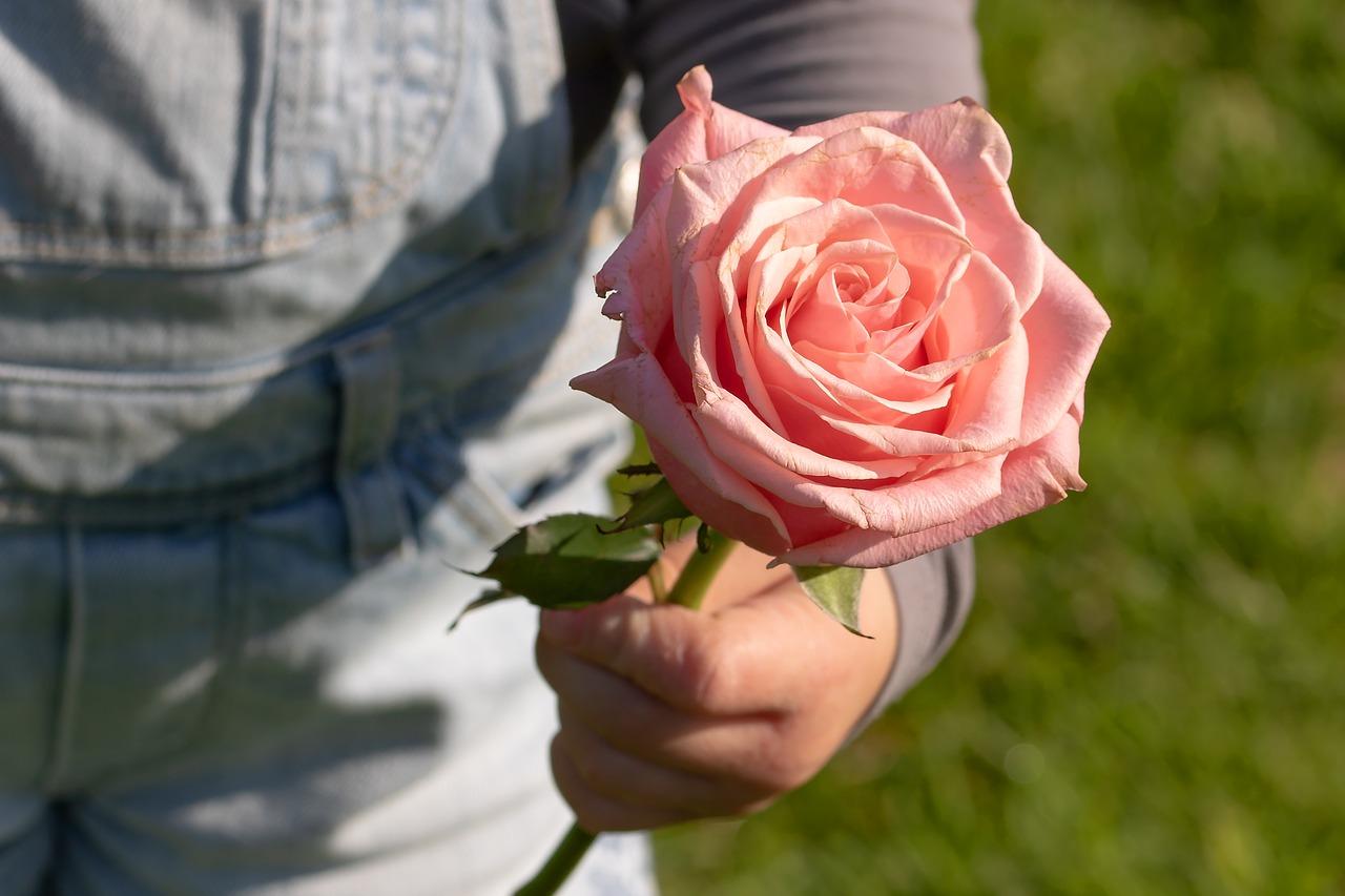 Rosor symboliserar kärlek